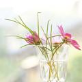 Photos: 秋の花を飾る
