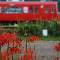 写真: 赤いコラボ