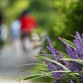 Photos: 日陰の花