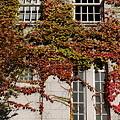 写真: 壁に秋