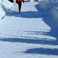 写真: 雪の道を