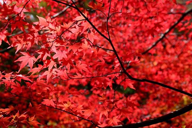 もみじ湖の紅葉#3