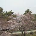 Photos: 何故か駅に近い木は咲いてる夙川