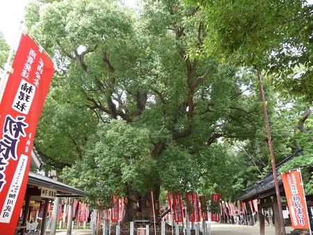 140831-住吉大社 (4)