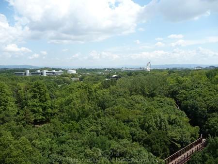 140830-万博記念公園 (15)