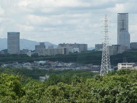 140830-万博記念公園 (23)