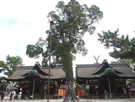 151017-住吉大社 (11)
