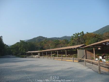 151021-伊勢神宮 内宮 (14)