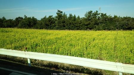 160110-豊橋→伊良湖 (100)