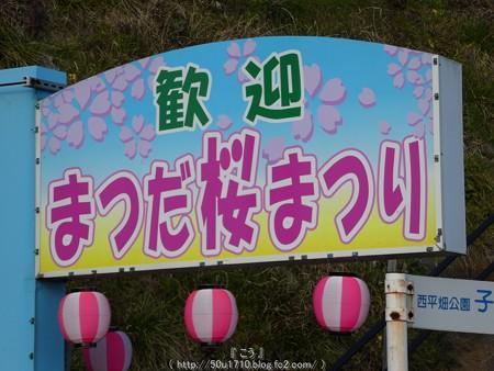 160226-松田町 河津桜 (194)