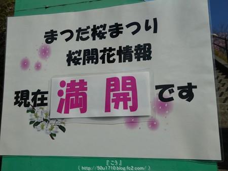 160226-松田町 河津桜 (5)