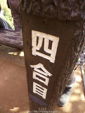 160226-松田町 河津桜 (31)