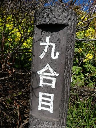 160226-松田町 河津桜 (54)