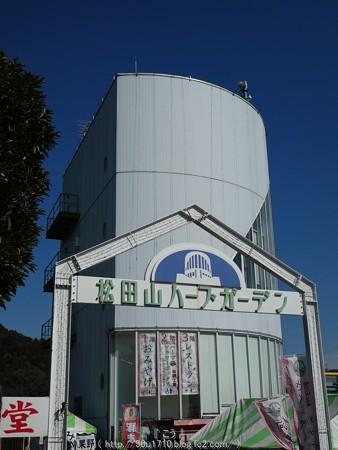 160226-松田町 河津桜 (88)