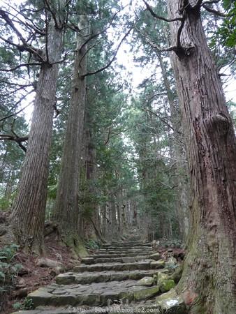 160324-熊野古道 大門坂 (62)