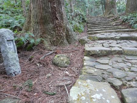 160324-熊野古道 大門坂 (71)