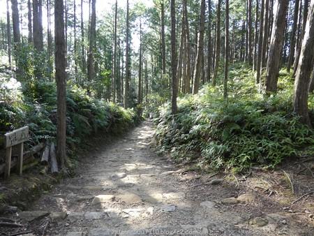 160325-熊野古道 小辺路 (49)