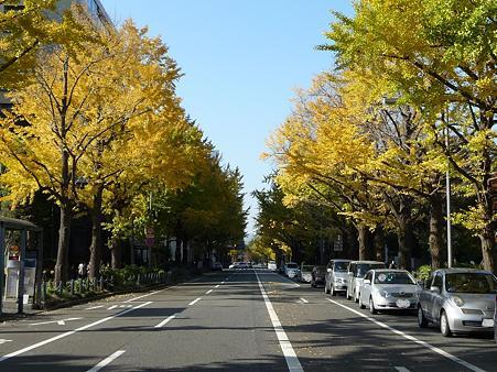 091123-山下公園通 (45)