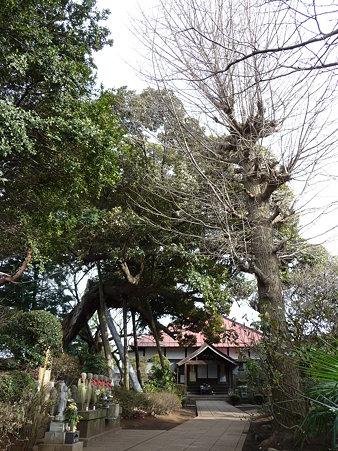100120-6.西福寺 (2)