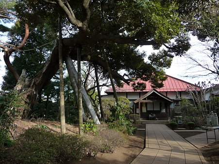 100120-6.西福寺 (6)