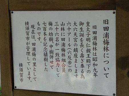 100301-田浦梅林 (92)
