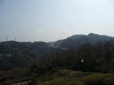 100301-田浦梅林 (73)