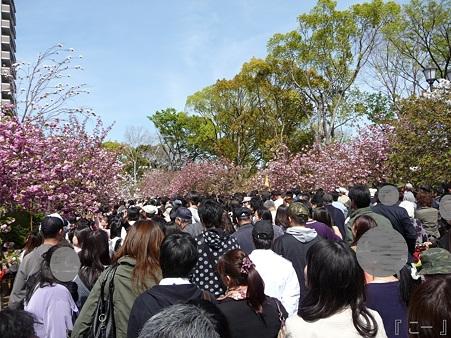 110417-造幣局 桜の通り抜け (34)