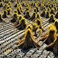 Photos: 収穫のあと