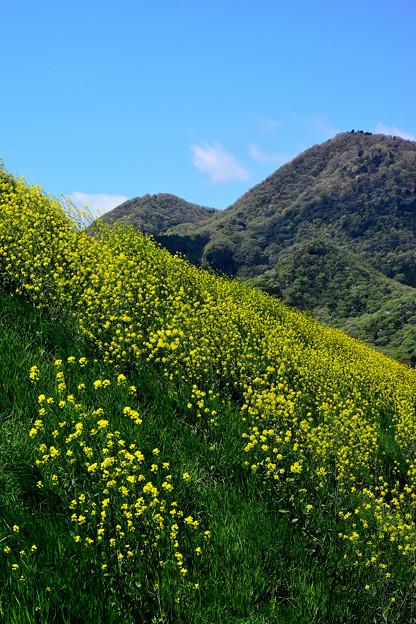 春の二上山