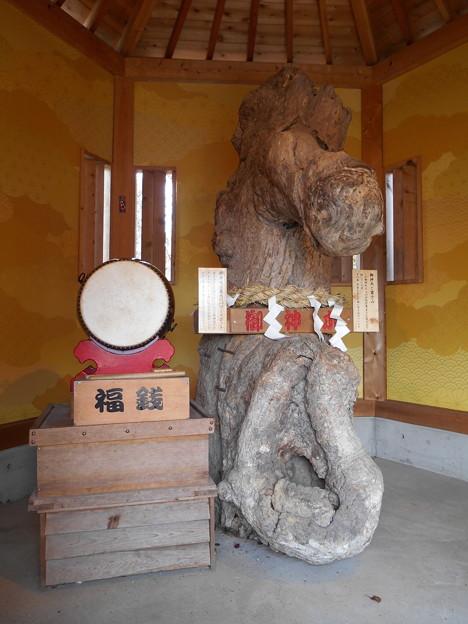 昇仙峡山頂和合権現ご神木2015.11.13