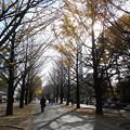 光が丘公園 銀杏並木2015.11.29