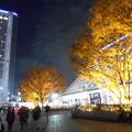 Photos: 後楽園ケヤキ紅葉とイルミネーション