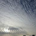写真: 巻積雲 うろこ雲 いわし雲 さば雲 どれかは分かりません (1)