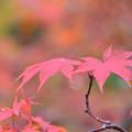 もみじ谷の紅葉