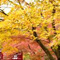 黄葉から紅葉へ