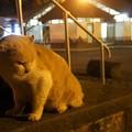 Photos: 夜の公園の猫