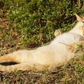 Photos: 無防備過ぎるノラ猫