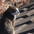 Photos: 河川敷のノラ猫
