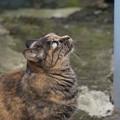 Photos: 見上げる猫