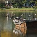 船の上の水鳥達3