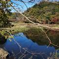 写真: 泉の森2