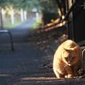 Photos: 猫は暖かい場所が好き