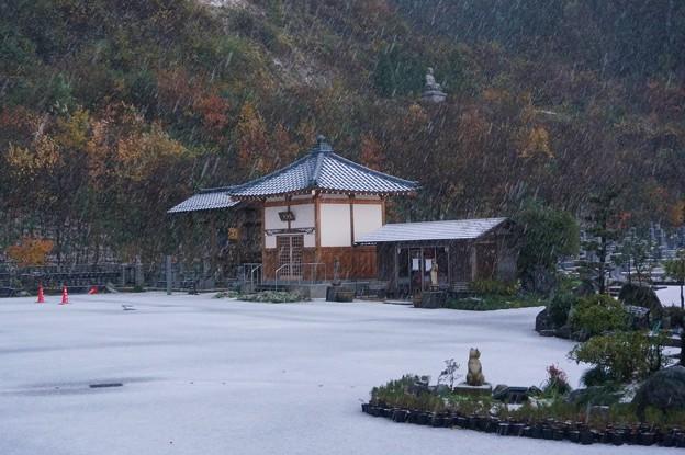Photos: 雪と紅葉の猫寺