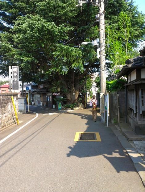 ヒマラヤ杉(みかどパン)