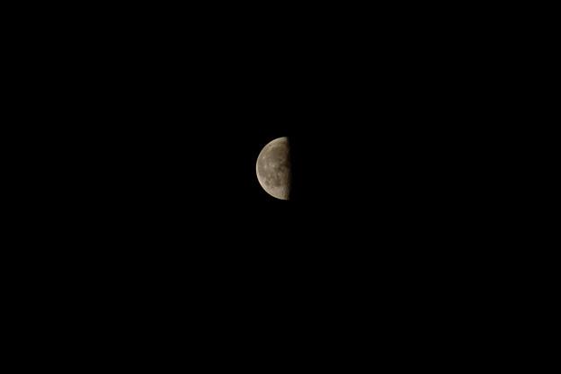 Photos: 下弦の月
