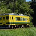 いすみ鉄道 普通列車12D (いすみ351)