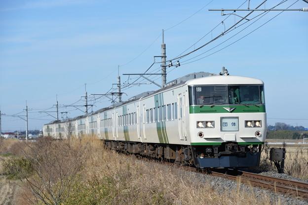 成田山初詣臨時列車 185系