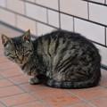 安中のセブンイレブンにいた猫
