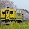 Photos: いすみ鉄道 普通列車 11D
