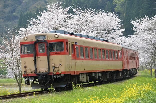 Photos: いすみ鉄道 普通列車 516D (キハ28 2346 + キハ52 125)